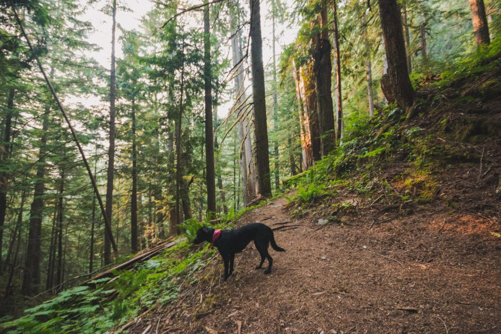 black lab hiking steep eaton lake trail