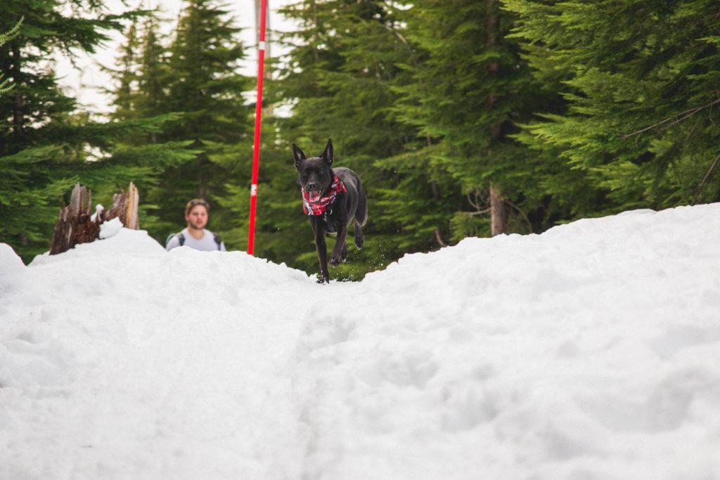 bowen_lookout_snowshoeing-14