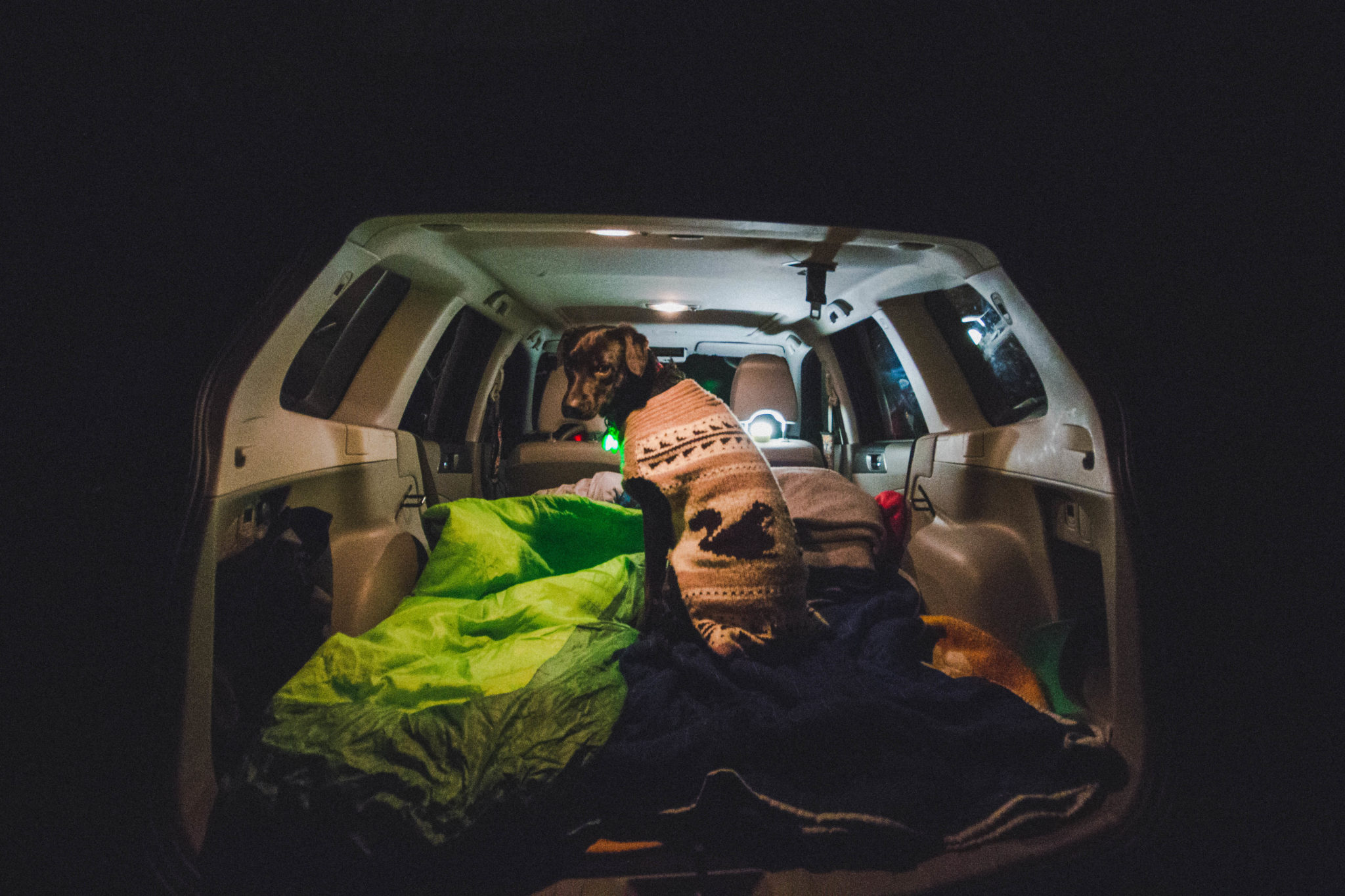 dog goes car camping with subaru forester at porteau cove