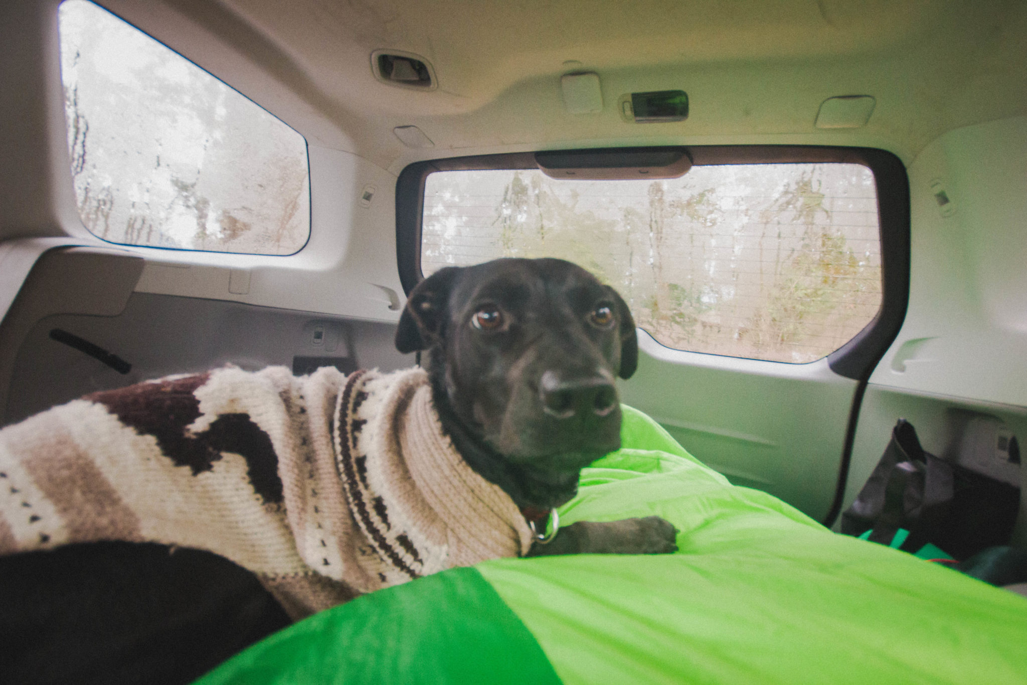 dog car camping in winter