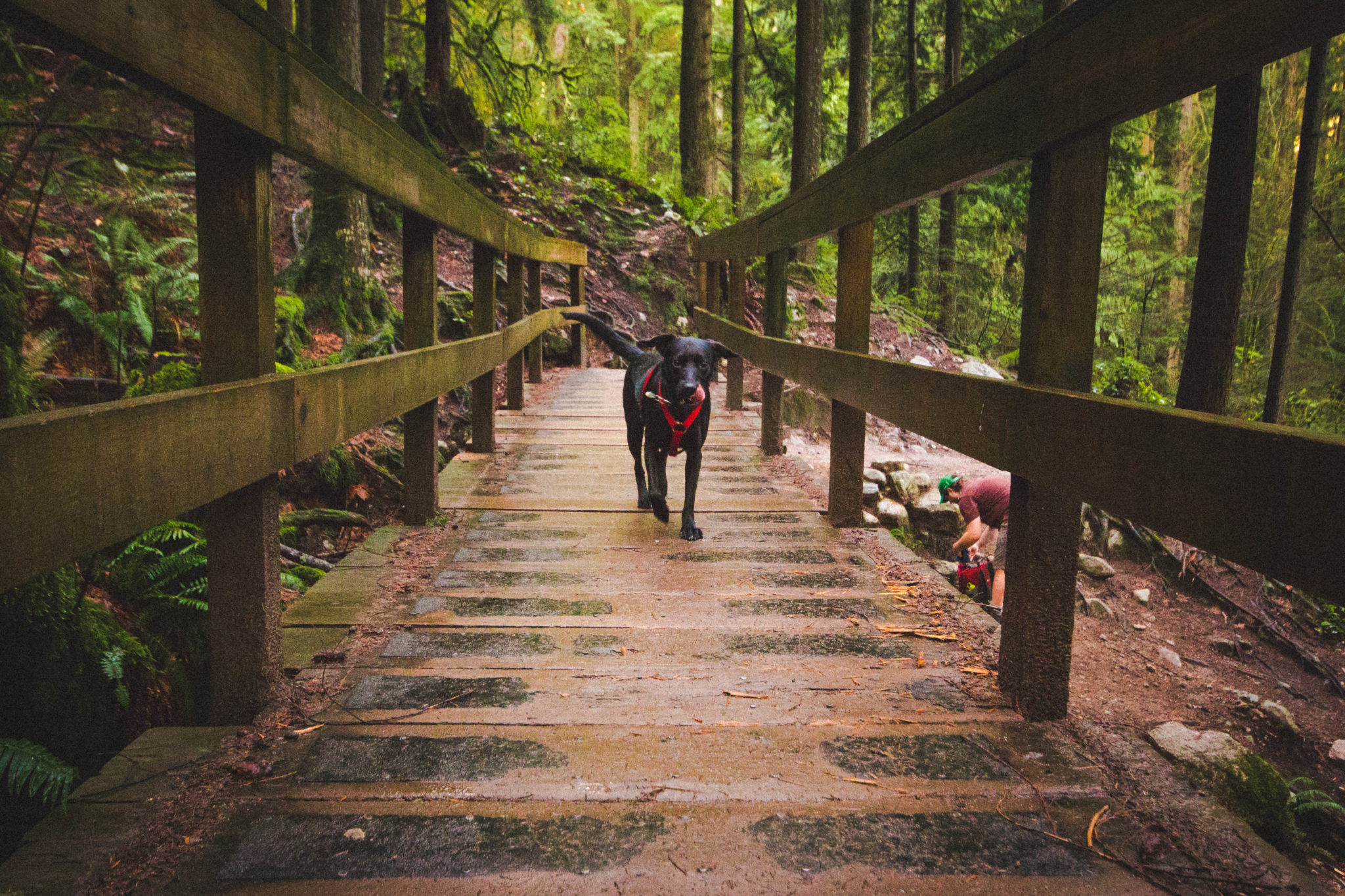 dog waits for humans while hiking to quarry rock