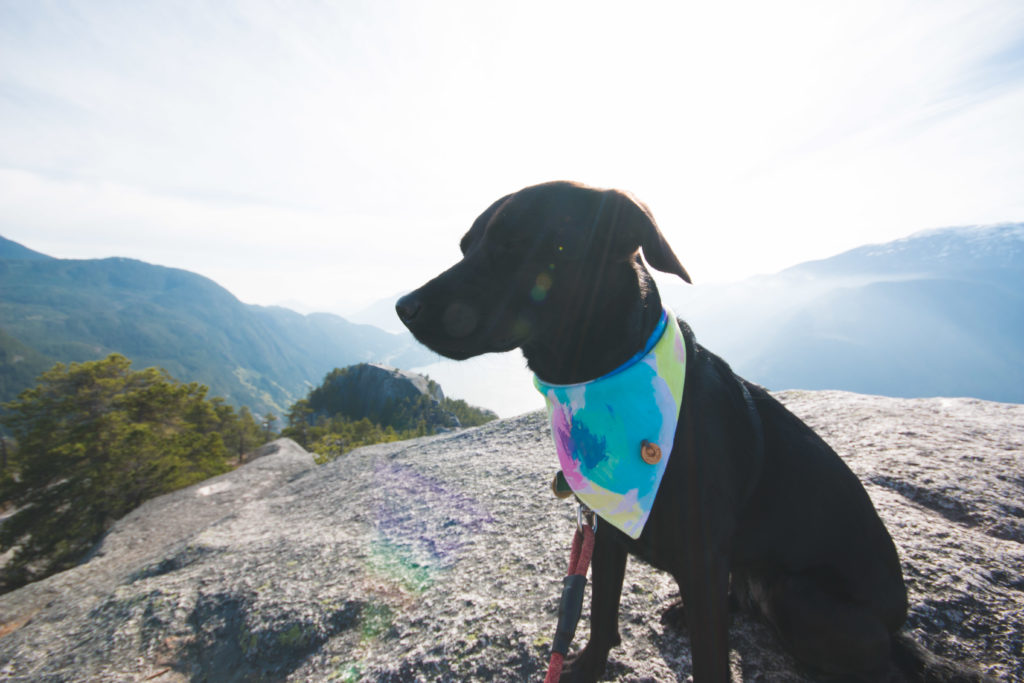 hiking-the-stawamus-chief